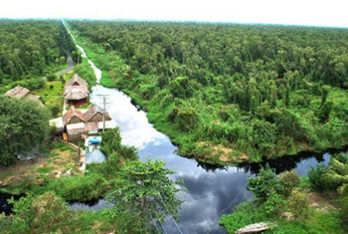 U Minh Ha cajuput forest – The destination of South Vietnam
