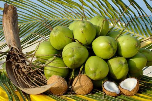 Vietnamese Coconut