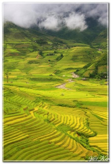 vietnam in photos, harvest days, Tay Bac, Tay Bac Vietnam