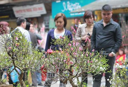 Peach flowers bloom to welcome Vietnamese Tet