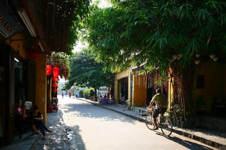Green trees in hoi an