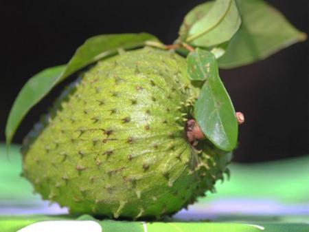 vietnamese fruit, tropical fruits, vietnam discovery, Corossolier fruit, vietnamese Corossolier fruit