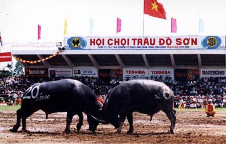 Do Son Buffalo Fighting Festival in Hai Phong city