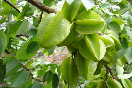Vietnamese Star Fruit
