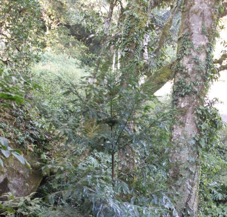Xuan Nha Nature Reserve in Moc Chau