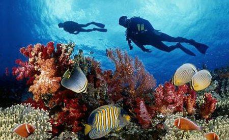 Coral diving