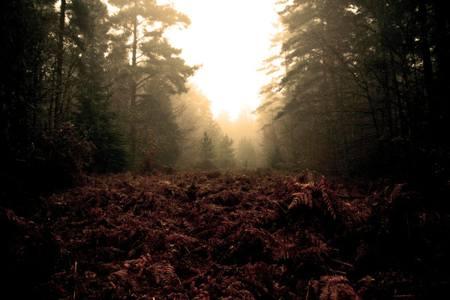 Thetford Forest in Suffolk