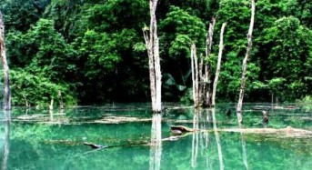 Cuc Phuong National Park – Where to relax and enjoy the life