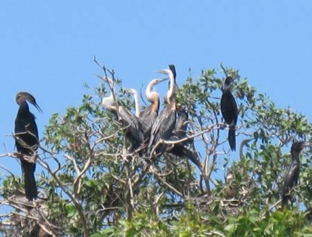 photo of birds in Tam Nong bird sanctuary 1