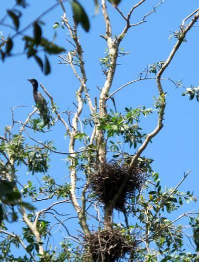 photo of birds in Tam Nong bird sanctuary 4