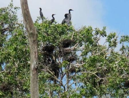 photo of birds in Tam Nong bird sanctuary 5