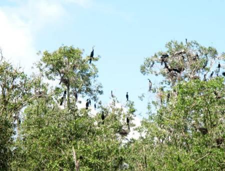 photo of birds in Tam Nong bird sanctuary 6