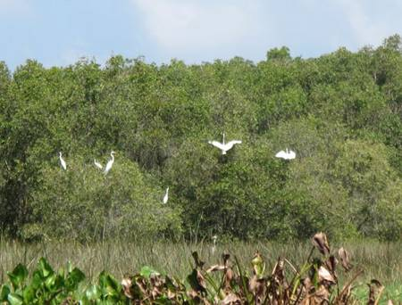 photo of birds in Tam Nong bird sanctuary 7
