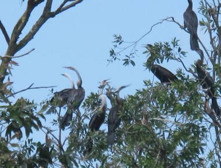 photo of birds in Tam Nong bird sanctuary 8