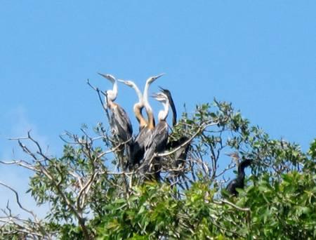photo of birds in Tam Nong bird sanctuary 9