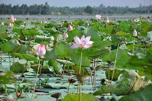 Dong Sen Thap Muoi - eco-tourism in Thap Muoi 1