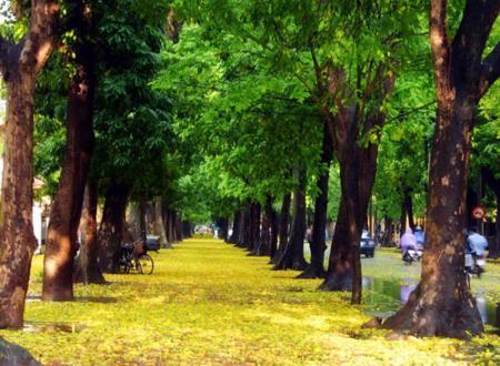Phan Dinh Phung street – The green street in Ha Noi